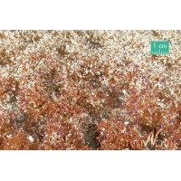 Blossom Tufts Late Fall (Large). Large Pack