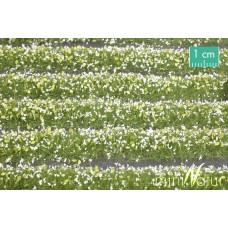 White Blossom Strips