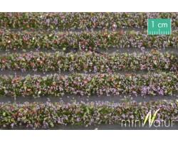 Violet Blossom Strips