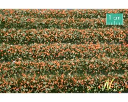 Orange Blossom Strips