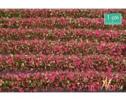 Magenta Blossom Strips