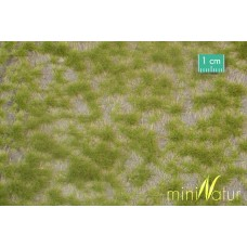 Two Colour Grass Tufts Spring (Small)