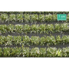White Flower Field Strips