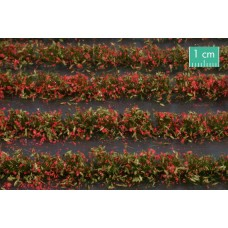 Red Flower Field Strips