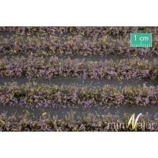 Violet Flower Field Strips