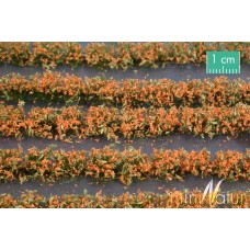 Orange Flower Field Strips
