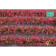 Magenta Flower Field Strips