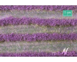 Lavender Field Strips (Small)