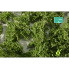 Ground Cover Evergreen (Bright)