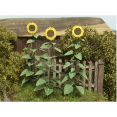 VG3-024 Sunflowers