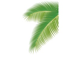 VG7-034 Palm Leaves Type 1